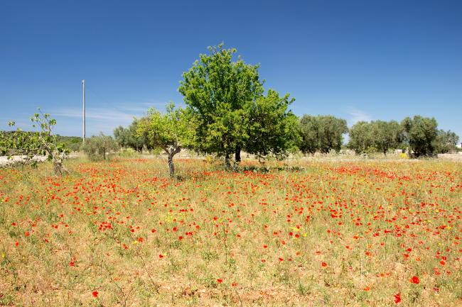 Foto di un paesaggio nel Salento, con gli accessori fondamentali.
