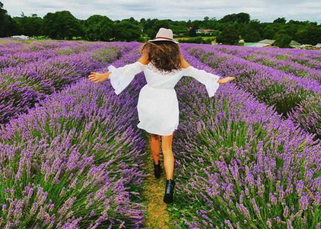 Il colore viola in fotografia, un campo di lavanda.
