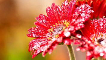 Come fotografare i fiori in macro.