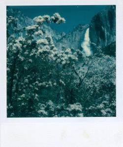 Foto polaroid di Ansel Adams.