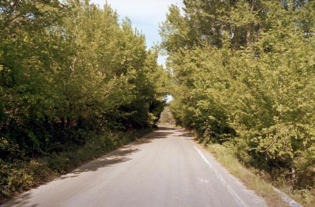 Foto analogica con rullino Ferrania e fotocamera Yashica, alberi per strada.